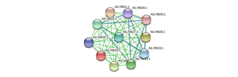 AIL78624.1 protein (Acinetobacter baumannii) - STRING interaction network
