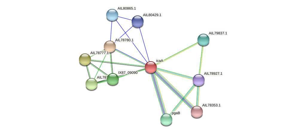 AIL78778.1 protein (Acinetobacter baumannii) - STRING interaction network