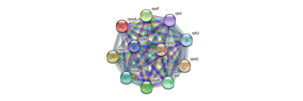 rpmA protein (Acinetobacter baumannii) - STRING interaction network
