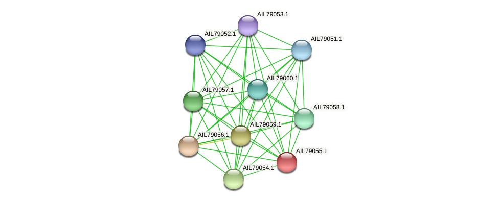 AIL79055.1 protein (Acinetobacter baumannii) - STRING interaction network