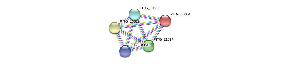 PITG_00004 protein (Phytophthora infestans) - STRING interaction network
