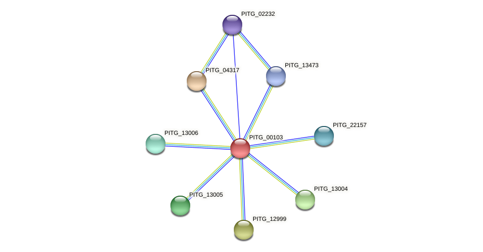 PITG_00103 protein (Phytophthora infestans) - STRING interaction network