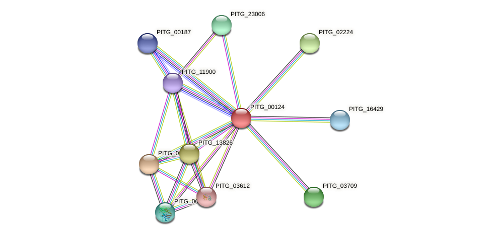 PITG_00124 protein (Phytophthora infestans) - STRING interaction network