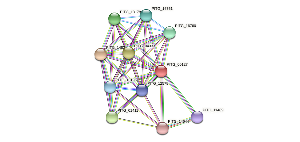 PITG_00127 protein (Phytophthora infestans) - STRING interaction network