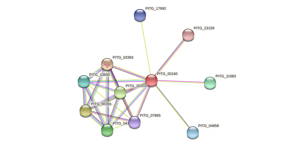 PITG_00160 protein (Phytophthora infestans) - STRING interaction network