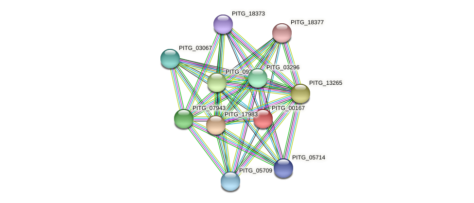 PITG_00167 protein (Phytophthora infestans) - STRING interaction network