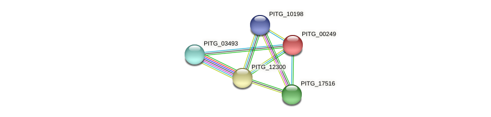 PITG_00249 protein (Phytophthora infestans) - STRING interaction network