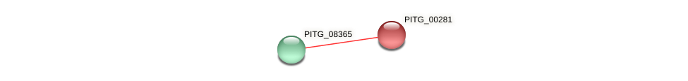 PITG_00281 protein (Phytophthora infestans) - STRING interaction network