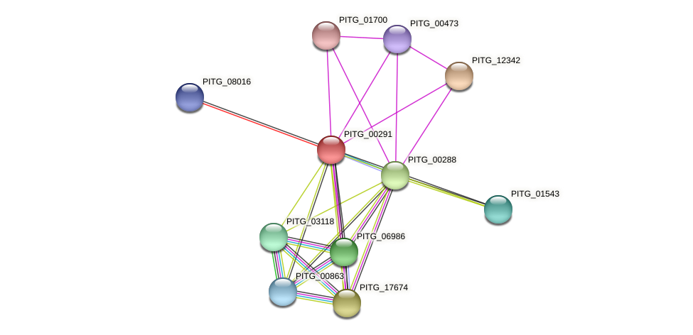 PITG_00291 protein (Phytophthora infestans) - STRING interaction network