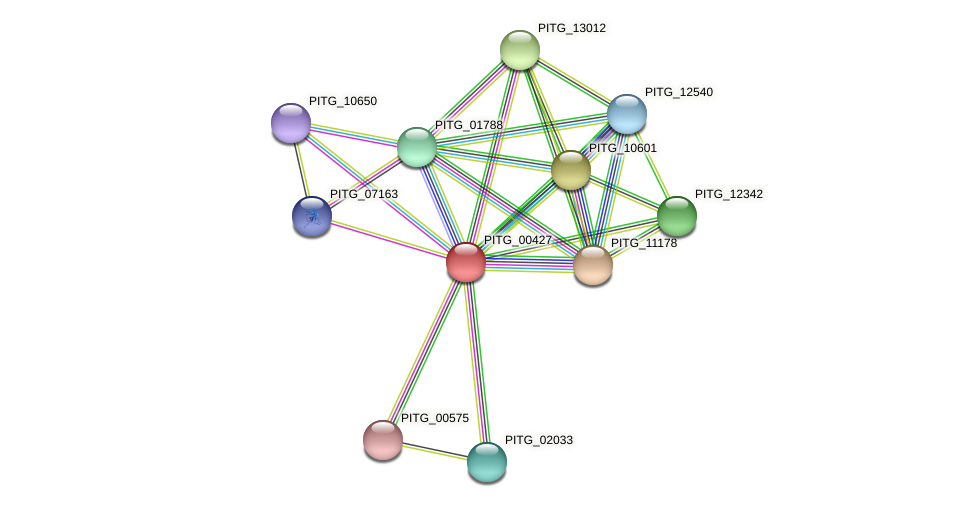 PITG_00427 protein (Phytophthora infestans) - STRING interaction network