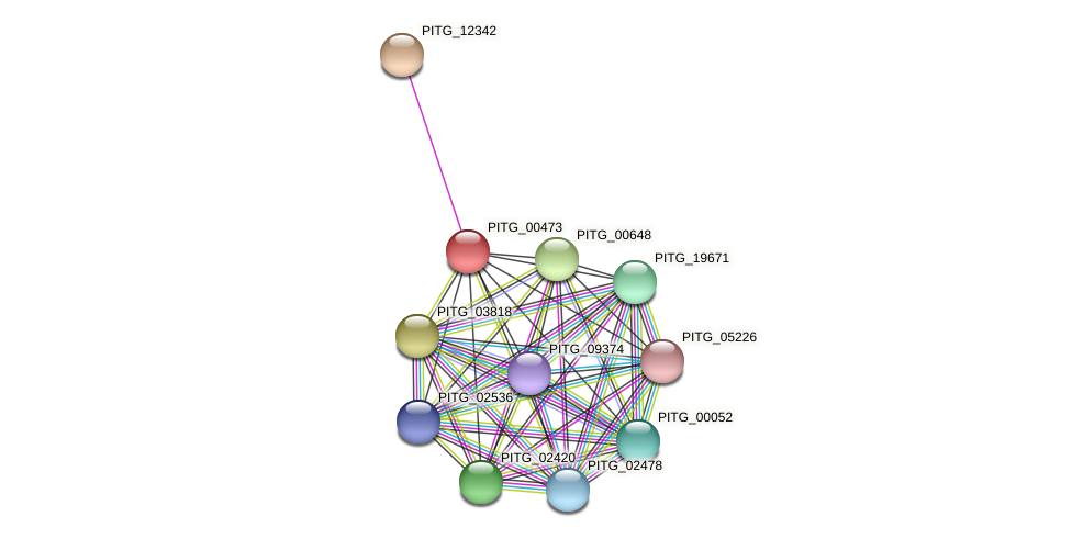 PITG_00473 protein (Phytophthora infestans) - STRING interaction network
