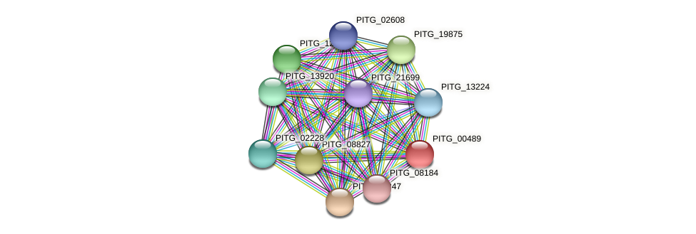 PITG_00489 protein (Phytophthora infestans) - STRING interaction network
