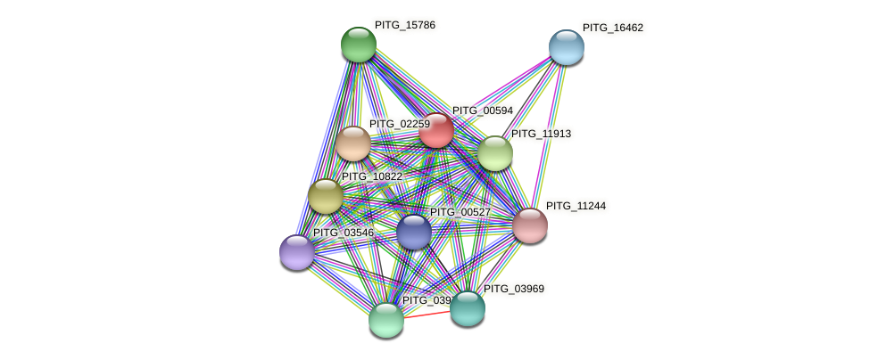 PITG_00594 protein (Phytophthora infestans) - STRING interaction network