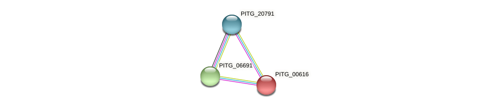 PITG_00616 protein (Phytophthora infestans) - STRING interaction network