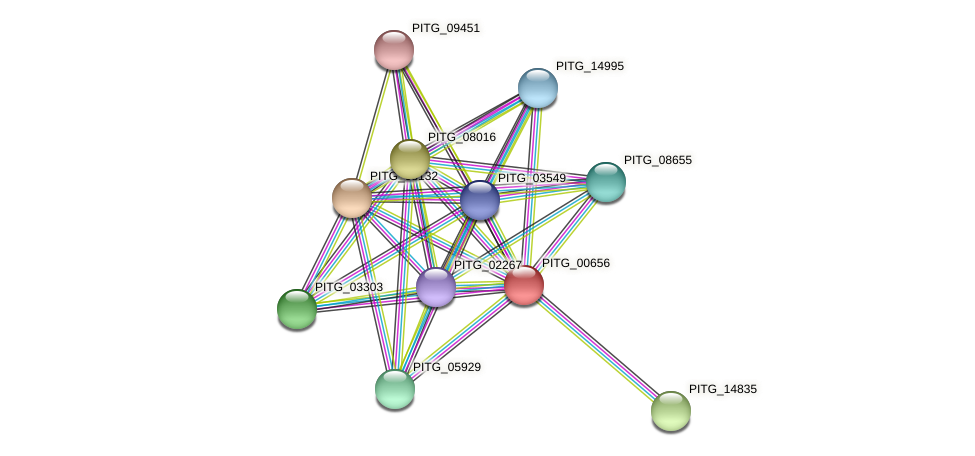 PITG_00656 protein (Phytophthora infestans) - STRING interaction network