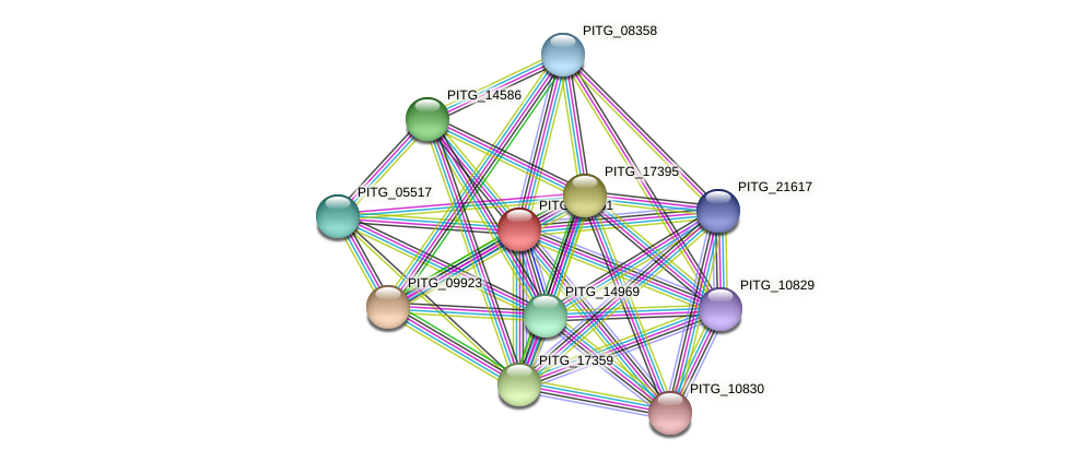 PITG_00761 protein (Phytophthora infestans) - STRING interaction network