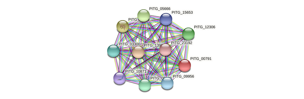 PITG_00791 protein (Phytophthora infestans) - STRING interaction network