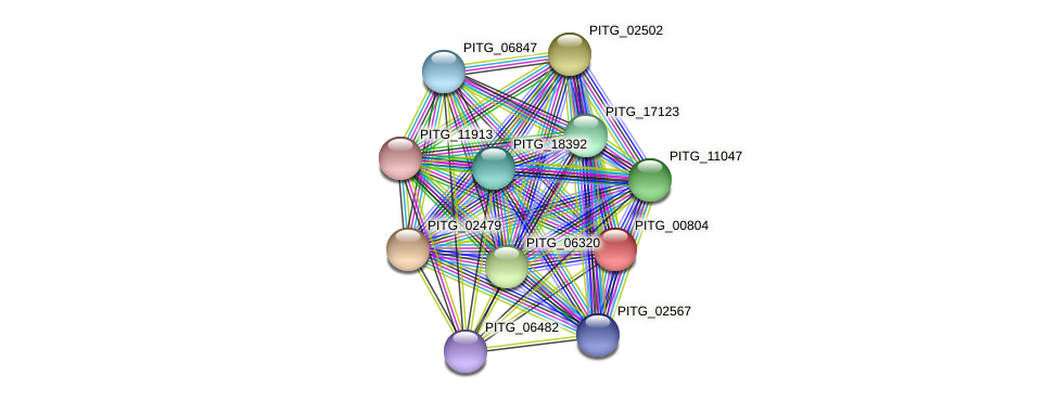 PITG_00804 protein (Phytophthora infestans) - STRING interaction network