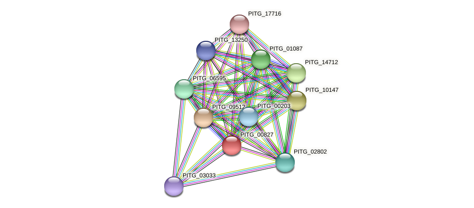PITG_00827 protein (Phytophthora infestans) - STRING interaction network