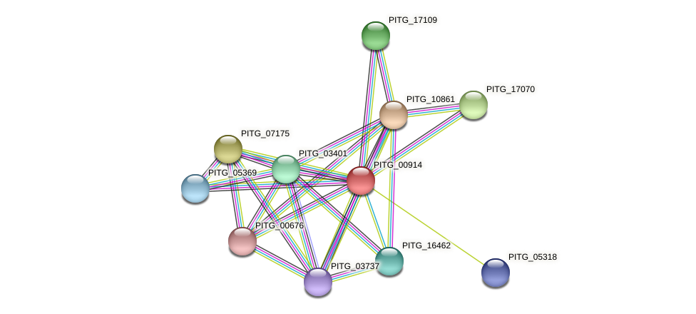 PITG_00914 protein (Phytophthora infestans) - STRING interaction network