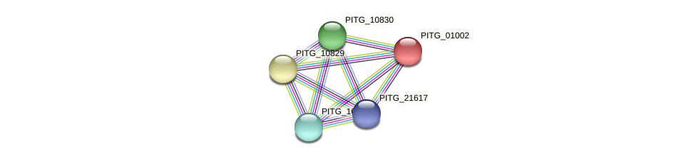 PITG_01002 protein (Phytophthora infestans) - STRING interaction network