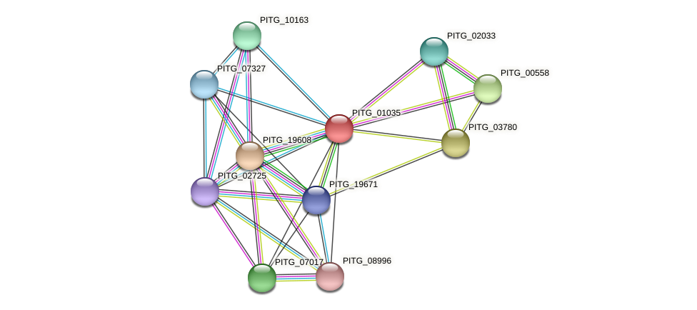 PITG_01035 protein (Phytophthora infestans) - STRING interaction network