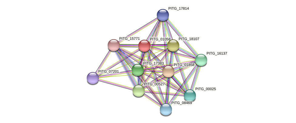 PITG_01058 protein (Phytophthora infestans) - STRING interaction network