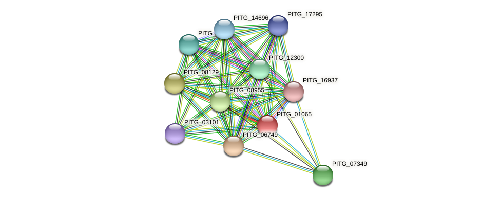 PITG_01065 protein (Phytophthora infestans) - STRING interaction network