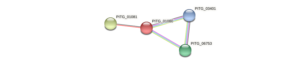 PITG_01080 protein (Phytophthora infestans) - STRING interaction network