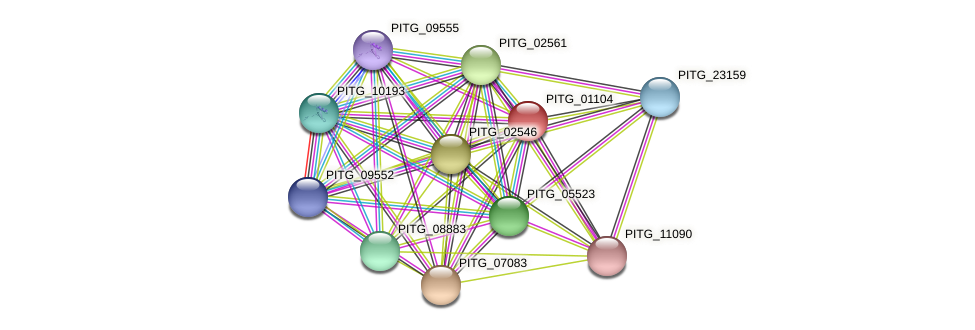 PITG_01104 protein (Phytophthora infestans) - STRING interaction network