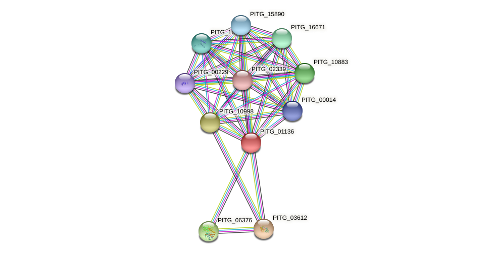 PITG_01136 protein (Phytophthora infestans) - STRING interaction network