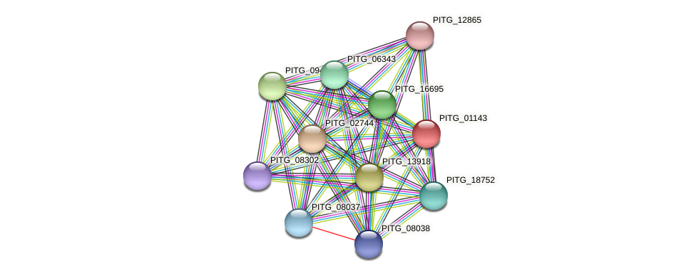 PITG_01143 protein (Phytophthora infestans) - STRING interaction network