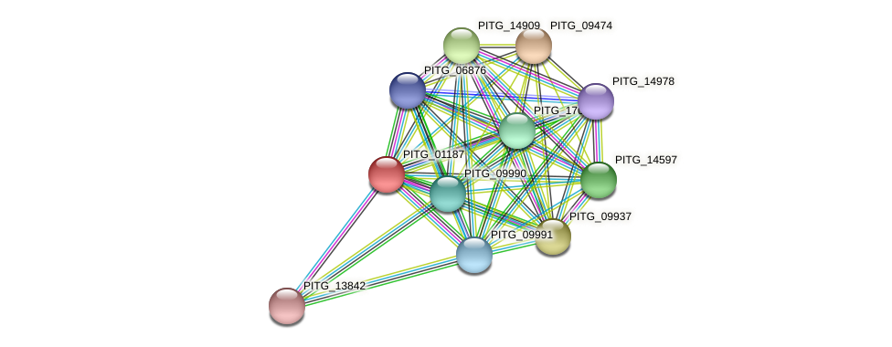 PITG_01187 protein (Phytophthora infestans) - STRING interaction network