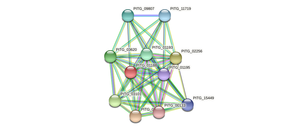 PITG_01188 protein (Phytophthora infestans) - STRING interaction network