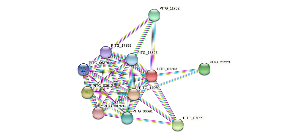 PITG_01203 protein (Phytophthora infestans) - STRING interaction network