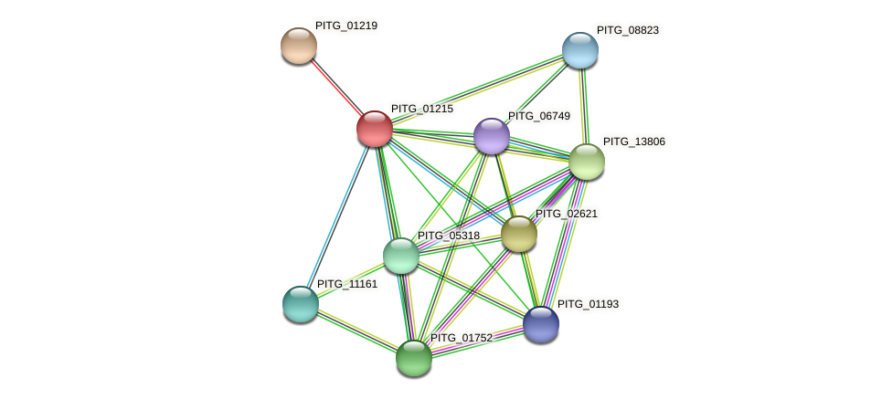 PITG_01215 protein (Phytophthora infestans) - STRING interaction network