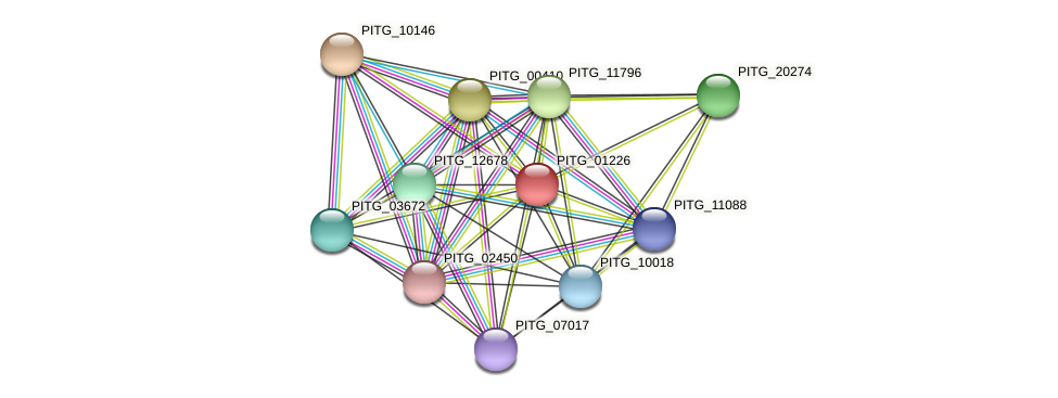 PITG_01226 protein (Phytophthora infestans) - STRING interaction network