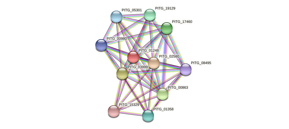 PITG_01248 protein (Phytophthora infestans) - STRING interaction network