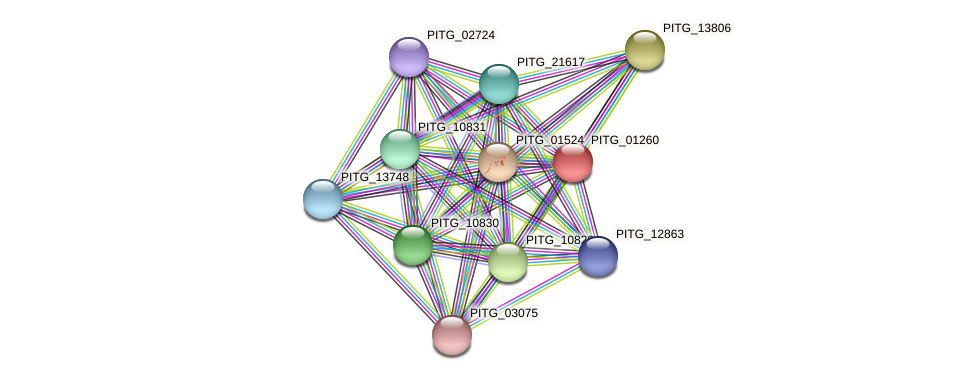 PITG_01260 protein (Phytophthora infestans) - STRING interaction network