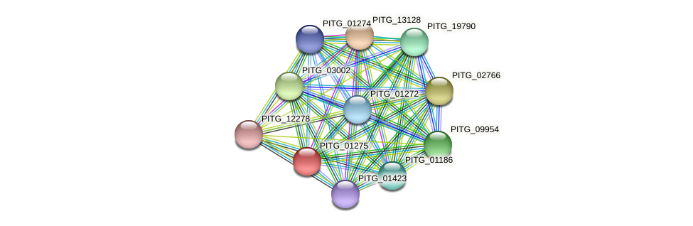PITG_01275 protein (Phytophthora infestans) - STRING interaction network