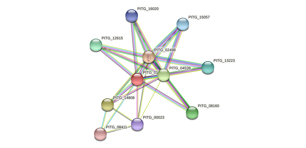 PITG_01287 protein (Phytophthora infestans) - STRING interaction network