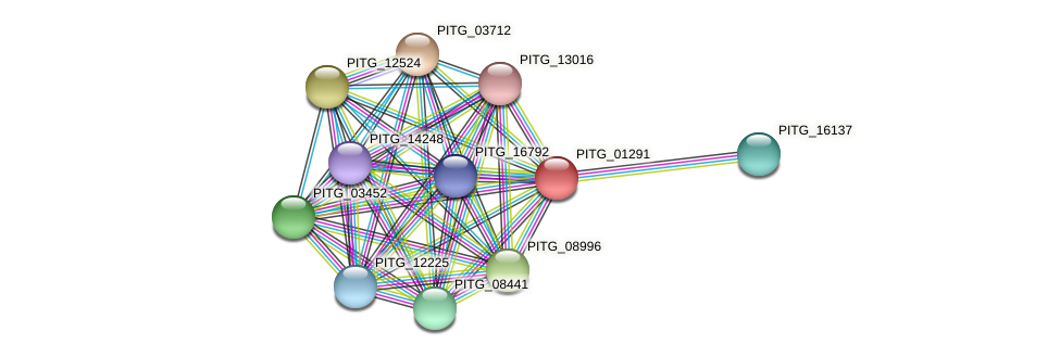 PITG_01291 protein (Phytophthora infestans) - STRING interaction network