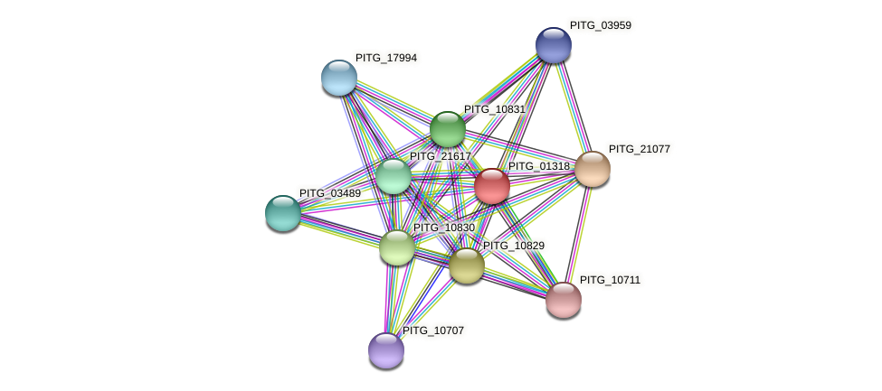 PITG_01318 protein (Phytophthora infestans) - STRING interaction network
