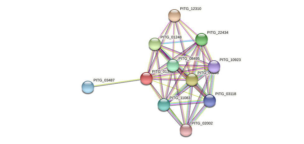 PITG_01358 protein (Phytophthora infestans) - STRING interaction network