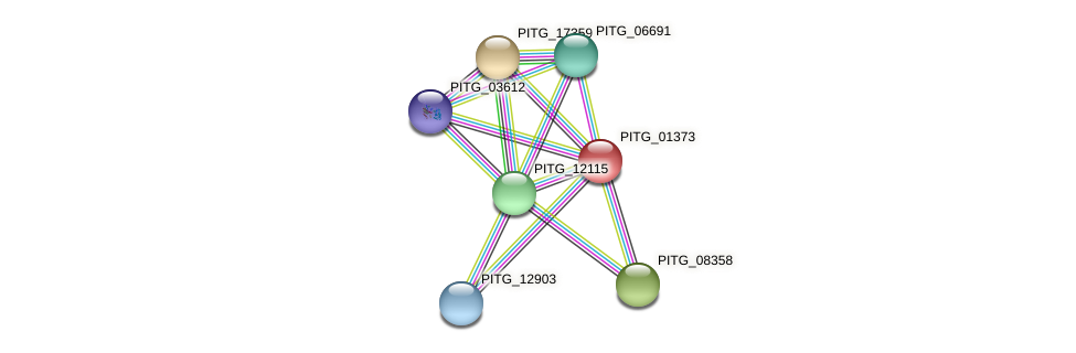 PITG_01373 protein (Phytophthora infestans) - STRING interaction network
