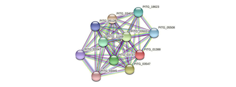 PITG_01388 protein (Phytophthora infestans) - STRING interaction network