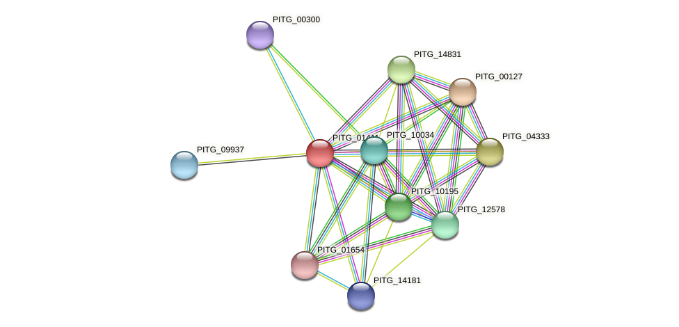 PITG_01411 protein (Phytophthora infestans) - STRING interaction network