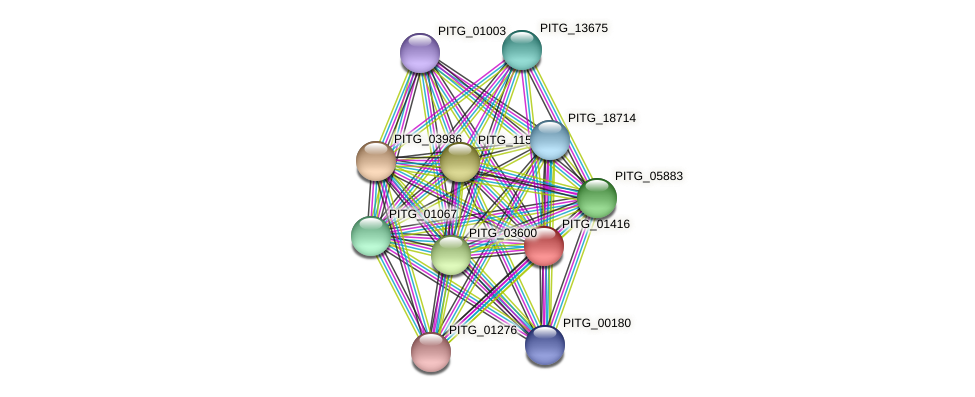 PITG_01416 protein (Phytophthora infestans) - STRING interaction network