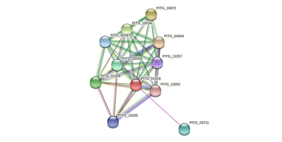 PITG_01418 protein (Phytophthora infestans) - STRING interaction network