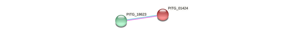 PITG_01424 protein (Phytophthora infestans) - STRING interaction network
